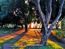 美好的日落在公园 免版税库存照片