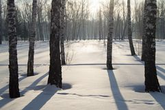 美好的日落在冬天公园,树,雪 图库摄影