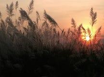 美好的日落在晚上 免版税库存照片