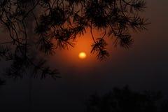 美好的日落在森林里自然迷人秀丽  免版税库存照片