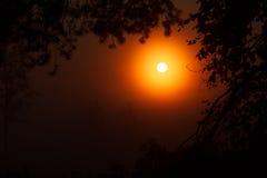美好的日落在森林里自然迷人秀丽  库存照片