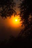 美好的日落在森林里自然迷人秀丽  图库摄影