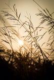 美好的日落在镇静晚上 免版税库存图片