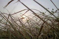 美好的日落有观点的在前景的草 免版税库存照片