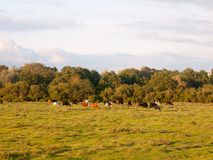 美好的日落点燃了与树和机智的绿色国家土地场面 免版税图库摄影