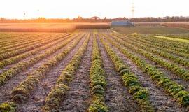 美好的日落的图象与领域和风景的 免版税库存图片