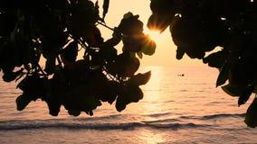 美好的日落的热带海运 股票视频