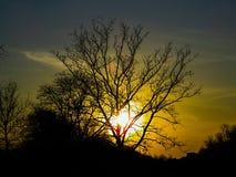 美好的日落通过树 免版税库存照片