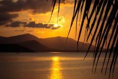 美好的日落 看法通过棕榈叶和 库存图片