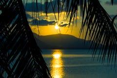 美好的日落 看法通过棕榈叶和 库存照片