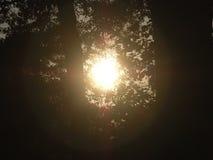 美好的日落 免版税库存照片