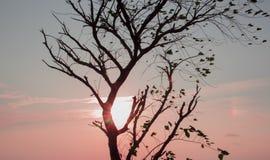 美好的日落 库存图片