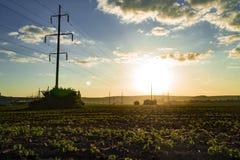 美好的早晨五颜六色的日出 有雾的领域看法与蓝色多云天空的 风景的横向 免版税库存照片