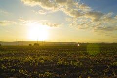 美好的早晨五颜六色的日出 有雾的领域看法与蓝色多云天空的 风景的横向 库存照片