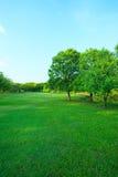 美好的早晨光在有绿草的领域的公园 库存照片