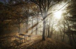 美好的早晨光通过森林 免版税库存图片