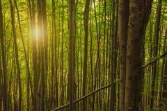 美好的早晨在一个绿色有雾的森林里 图库摄影