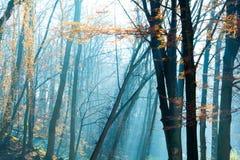 美好的早晨在有太阳的有薄雾的秋天公园发出光线 秋天 定调子 免版税库存照片