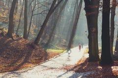美好的早晨在有太阳的有薄雾的秋天公园发出光线 秋天 定调子 免版税图库摄影