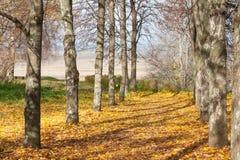 美好的早晨在有星期日的秋天森林发出光线 免版税库存照片