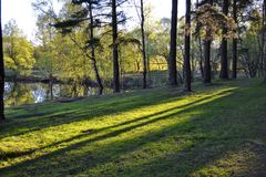 美好的早晨场面在有太阳光芒和长的阴影的森林里 库存照片