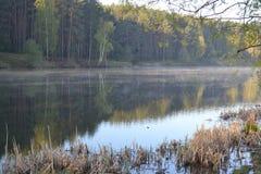 美好的早晨场面在有太阳光芒和长的阴影的森林里 免版税库存照片
