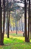 美好的早晨场面在有太阳光芒和长的阴影的森林里 免版税库存图片