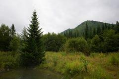 美好的早期的森林横向早晨 库存图片
