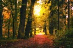 美好的早期的秋天欧洲森林大局葡萄酒照片  免版税库存图片