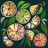 美好的明亮的五颜六色的可口鲜美美味的成熟水多的可爱的橙色夏天秋天点心切片桔子和普通话轻拍 向量例证