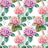 美好的明亮的典雅的秋天美妙的五颜六色的嫩柔和的桃红色草本花卉八仙花属开花 库存例证