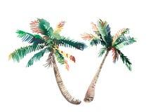 美好的明亮的逗人喜爱的绿色热带可爱的美妙的夏威夷花卉草本夏天两棕榈树水彩手剪影 库存图片