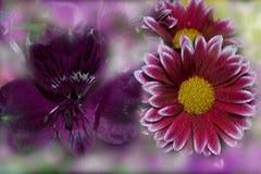 美好的明亮的颜色,对比的颜色的构成 免版税库存照片
