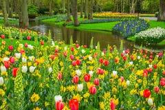 美好的春天在池塘附近开花在Keukenhof公园在荷兰 免版税库存图片