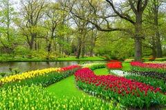 美好的春天在池塘附近开花在Keukenhof公园在荷兰 库存照片