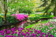 美好的春天在池塘附近开花在Keukenhof公园在荷兰 免版税库存照片