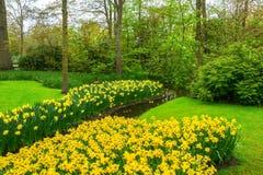 美好的春天在池塘附近开花在Keukenhof公园在荷兰 库存图片