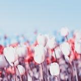 美好的春天在蓝天的迷离背景开花 Bou 库存图片