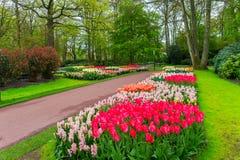 美好的春天在Keukenhof公园开花在荷兰 免版税库存图片