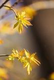 美好的春天开花的树 免版税库存图片