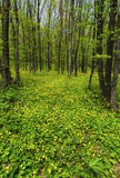 美好的春天森林横向 库存照片