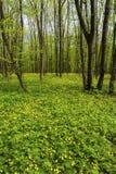 美好的春天森林横向 免版税库存图片