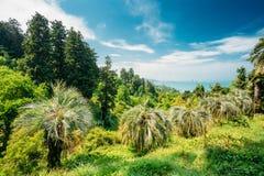 美好的春天热带庭院或森林森林 没人 夏天 库存图片