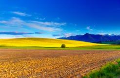美好的春天犁了领域和绿色和黄色草甸 山在背景中 图库摄影