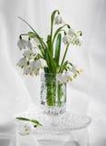 美好的春天第一朵花花束  库存照片
