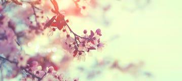 美好的春天自然场面 桃红色开花的树 免版税库存照片