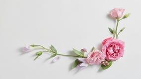美好的春天花卉框架 免版税库存图片