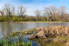 美好的春天视图在自然狂放的公园  一些反弹严格晴朗那里不是的蓝色云彩日由于域重点充分的绿色横向小的移动工厂显示天空是麦子白色风 图库摄影