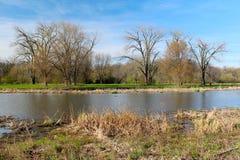 美好的春天视图在自然狂放的公园  一些反弹严格晴朗那里不是的蓝色云彩日由于域重点充分的绿色横向小的移动工厂显示天空是麦子白色风 免版税库存图片