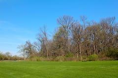 美好的春天视图在自然狂放的公园  一些反弹严格晴朗那里不是的蓝色云彩日由于域重点充分的绿色横向小的移动工厂显示天空是麦子白色风 免版税图库摄影